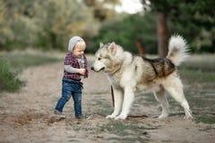 Le petit garçon tient le chien proche de malamute sur la promenade dans la forêt Image libre de droits