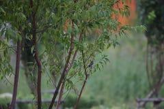 Le petit gris avec avec le ventre à nouveau Bohai se gare photographie stock