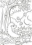 Le petit hérisson aimable mignon se repose près de l'arbre et sourit Photographie stock libre de droits