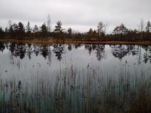 Le petit lac dans la forêt image stock
