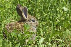 Le petit lapin est sur un pâturage Images stock