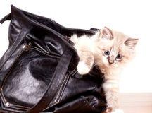 Le petit minou sort du sac photo libre de droits