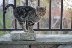 Le petit noir gris a coloré le chat sur le bricket rouge Image libre de droits