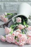 Le petit oeillet rose tendre fleurit dans le vase à émail sur le béton gris, le mother& x27 ; fond de carte de voeux de jour de s Images stock