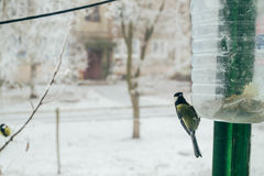 Le petit oiseau mange Photo stock
