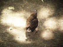 Le petit oiseau ne peut pas voler Position sur le trottoir avec la lumière du soleil douce Image libre de droits