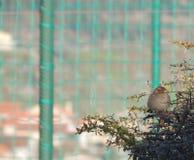 Le petit oiseau regarde la gauche photographie stock libre de droits