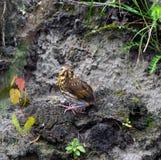 Le petit oisillon avale la rivière (rapide) photos libres de droits