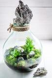 Le petit pot avec la forêt vivante, sauvent l'idée de la terre Photographie stock libre de droits