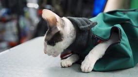 Le petit repos de chat portent dedans le sac banque de vidéos