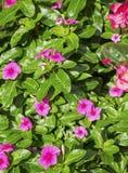 Le petit rose fleurit le fond Photo stock