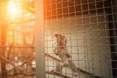 Le petit singe est animal dans la cage le zoo Images libres de droits