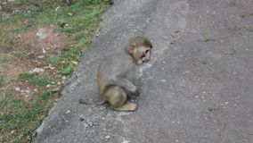 Le petit singe mange du fruit banque de vidéos