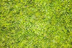 Le petit vert laisse le fond Photo stock