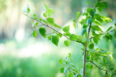 Le petit vert part sur une branche pour votre conception Images libres de droits