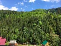 Le petit village près des montagnes vertes, forêt de pin image libre de droits