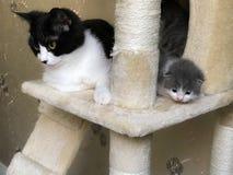 Le petits chat et maman sont sur le jabot du ` s de chat Images libres de droits