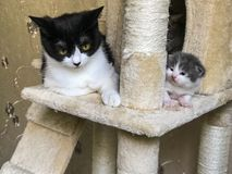 Le petits chat et maman sont sur le jabot du ` s de chat Photographie stock