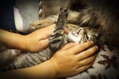 Le petits chaton et chat ont l'amusement sur le divan Images stock