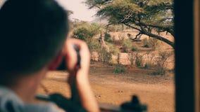 Le photographe sur le safari en Afrique prend des photos d'une girafe sauvage hors de la voiture banque de vidéos