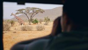 Le photographe sur le safari en Afrique prend des photos d'une girafe sauvage hors de la voiture clips vidéos