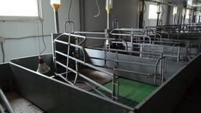 Le le più nuove penne vuote nella stanza di maternità sono sull'azienda agricola industriale moderna dell'maiale-allevamento stock footage