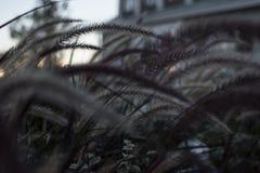 Le piante è turbine di neve Immagine Stock Libera da Diritti