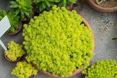 Le piante, anche chiamate piante verdi, sono eucarioti multicellulari Fotografie Stock