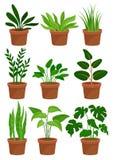 Pianta da appartamento zamioculcas una pianta in vaso for Piante decorative