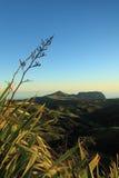 Le piante del lino nell'alba drammatica si illuminano sulla Sant'Elena Fotografia Stock Libera da Diritti