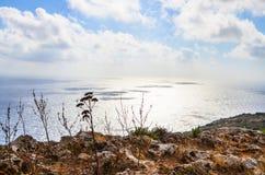 Le piante dell'agave dal Mediterrenean costeggiano sotto i cieli nuvolosi luminosi Fotografia Stock