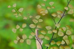 Le piante della felce riguardano il terreno della foresta naturale Immagine Stock