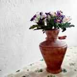 le piante della nonna immagini stock