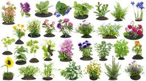 Le piante di giardino si sviluppano nell'insieme del suolo Immagine Stock Libera da Diritti