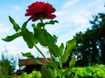 Le piante di verdure si sviluppano nel giardino nella campagna con flusso fotografia stock