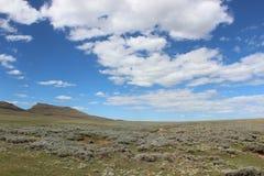 Le piante e la natura nel Lesotho, Africa del Sud, arbusto di elevata altitudine atterra Immagine Stock