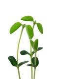Le piante giovani gradicono un familiy immagine stock