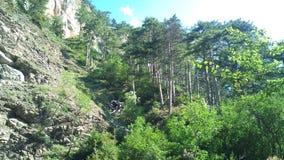 Le piante libera sulle rocce fotografie stock