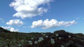 Le piante nella tundra archivi video