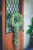 Le piante ornamentali circondano la caduta sulla vecchia porta di legno Fotografia Stock