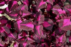 Le piante ornamentali scaldano Fotografia Stock Libera da Diritti