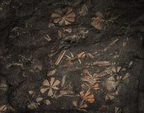 Le piante preistoriche antiche si sono indurite in un pezzo di carbone Fotografia Stock