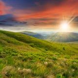 Le piante selvatiche alla montagna completano al tramonto Immagini Stock