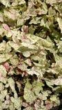 Le piante sono l'ornamento della natura Fotografia Stock Libera da Diritti