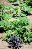 Le piante sul garten inseriscono nell'estate Immagini Stock