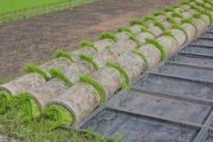 Le piantine della bobina in preparazione di trasporto al raccolto seguente nel campo Immagini Stock Libere da Diritti