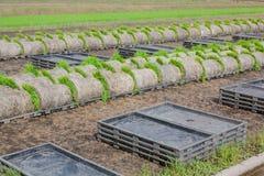Le piantine della bobina in preparazione di trasporto al raccolto seguente nel campo Fotografia Stock Libera da Diritti