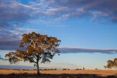 Le pianure si avvicinano territorio del capitale a Canberra, Australia immagini stock libere da diritti