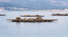 Le piattaforme di legno hanno chiamato i bateas per coltivazione della cozza fotografia stock libera da diritti