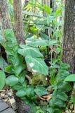 Le piccole foglie piantano la scalata sull'albero in foresta fotografia stock libera da diritti
